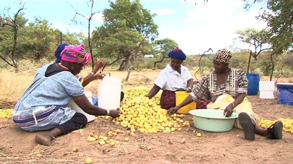Women processing marula fruit