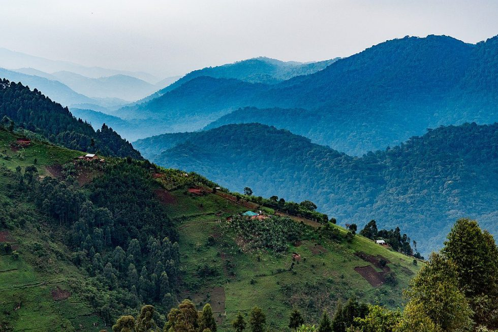 Homesteads dot the valley below Nkuringo. The forested hills behind are the start of Bwindi Impenetrable National Park, home to many of Uganda's iconic Mountain Gorillas. Nkuringo, Uganda.