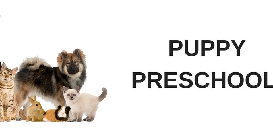 puppy preschool training