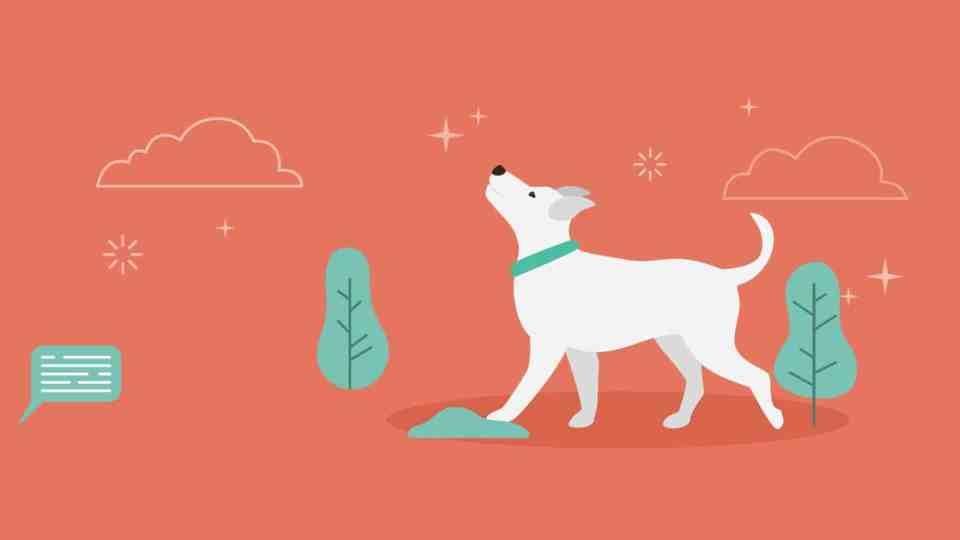 Most Googled Dog Questions