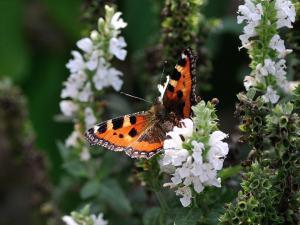 mariposa-jardin