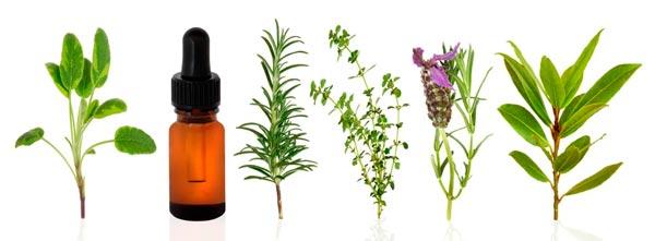 guia-da-alma-guia-terapias-holisticas-qual-terapia-devo-fazer-terapia-floral