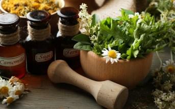 voce-sabe-a-diferenca-entre-plantas-in-natura-e-medicamentos-fitoterapicos