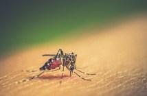 cuidados-com-a-dengue-devem-ser-redobrados-durante-o-verão