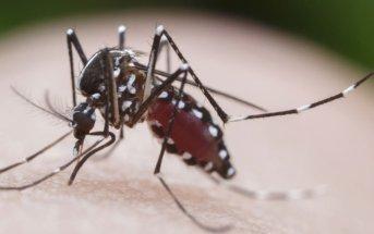 numeros-da-dengue-disparam-no-brasil-neste-comeco-de-ano