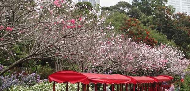 Jardim Botânico de Sydney: Gratuito e Esplendoroso!