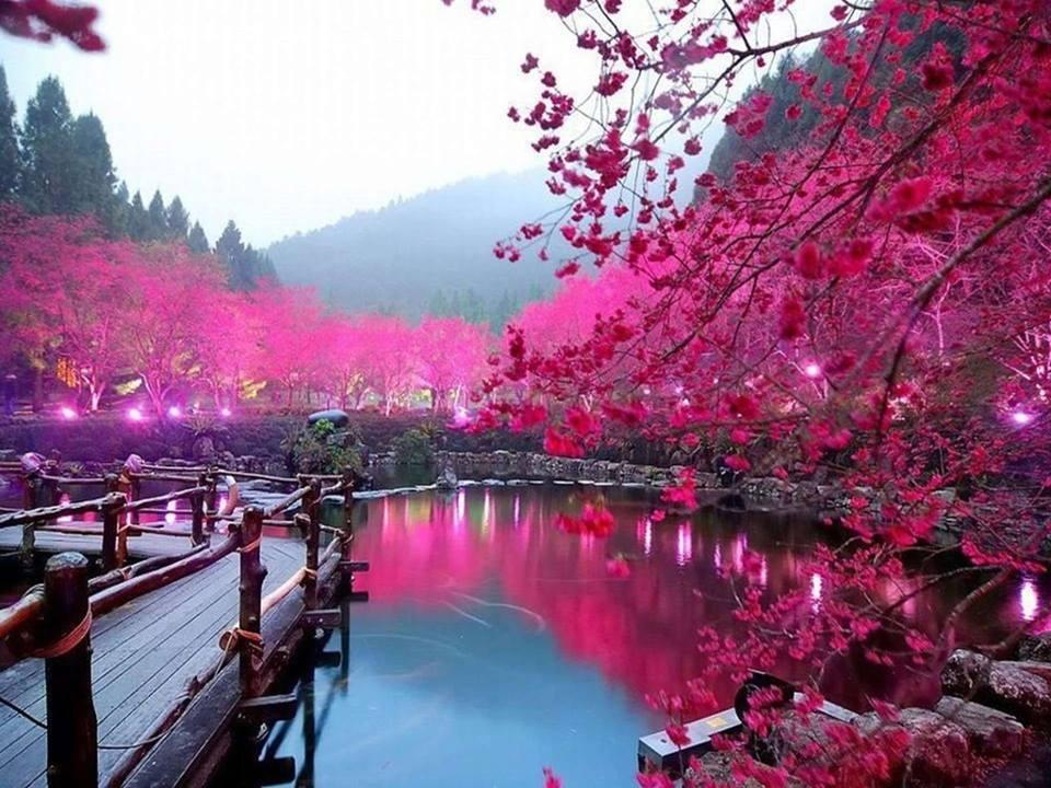 Vuelo a Japon por 366 € Ida y Vuelta