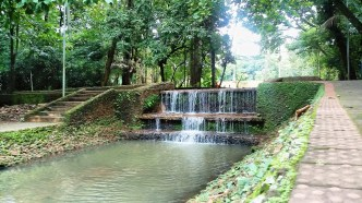 Bosque dos Buritis