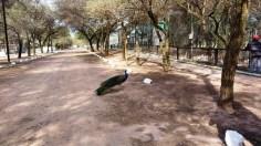 Zoológico de Sáenz Peña