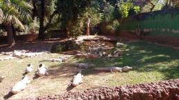 Zoológico da UFMT
