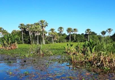 Reserva Natural Provincial Esteros del Iberá