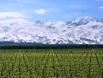 Vinícola Terrazas de los Andes