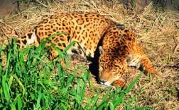 Reserva Ecológica El Puma