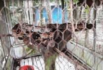 Parque Zoobotânico CFSOL 8° BIS