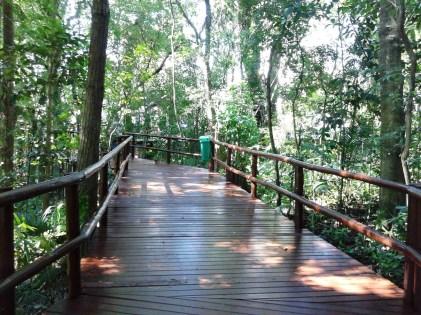 Bosque Pedro Medeiros