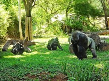 Jardim Zoológico e Botânico/ foto Suziane Fonseca