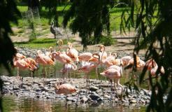 Zoo Bubalcó