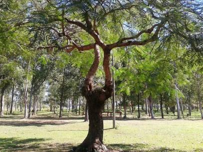 Biocentro de Guyra Paraguay