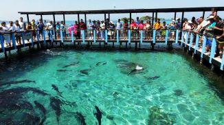 Oceanario Islas del Rosario