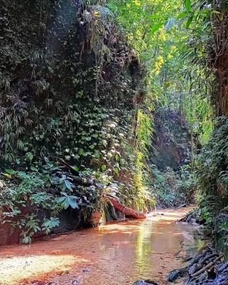 Reserva Natural y Ecoturística Las Dalias