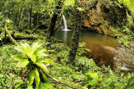 Reserva Ecológica do Sebuí