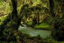 Bosque Encantado/ foto jpurresti