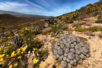 Parque Nacional Llanos de Challe