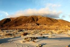 Parque Nacional Llanos de Challe/ foto Francisco Javier Opazo Solar
