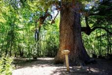 Parque Nacional Radal Siete Tazas