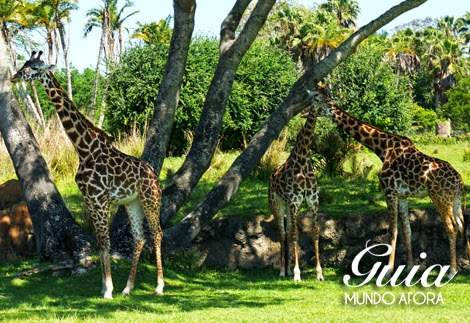 Roteiro Animal Kingdom