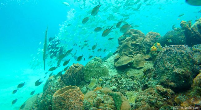 mergulho em Barbados