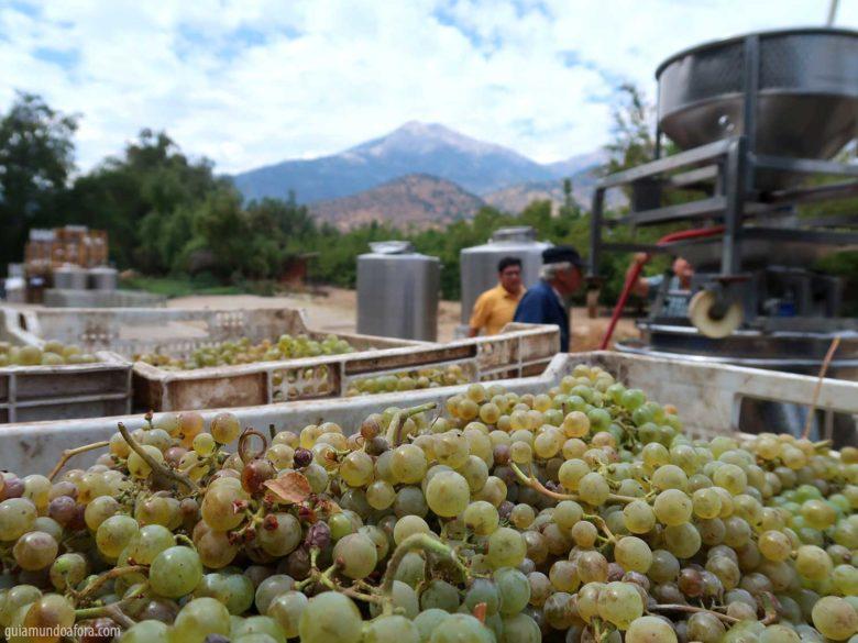 colheita vinícola El Principal