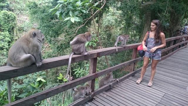 Cuidadín con los monos, que tienen la mano larga🤣🤣🤣