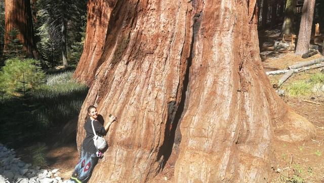 Las secuoyas son un imprescindible que ver en Yosemite.