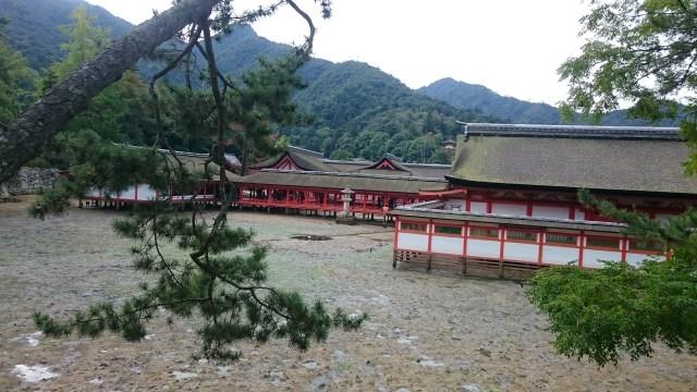 En el momento que el agua se encuentra baja se puede llegar tanto al santuario como al torii de Itsukushima. Miyajima.