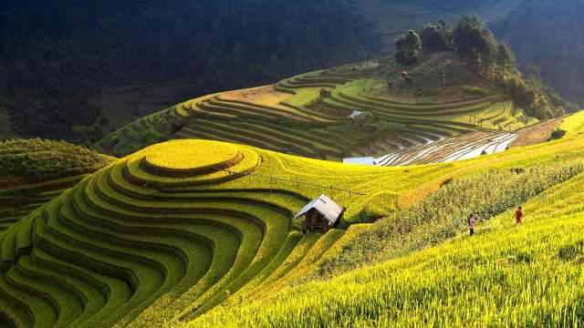 plantaciones arroz