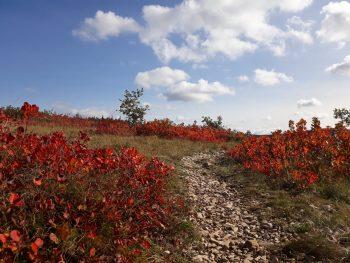 escursione in carso colori autunno sommacco 24 ottobre 2021