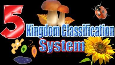 Five Kingdome Classification System