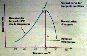 effect of temperature on enzyme reaction