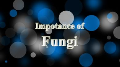 importance of fungi