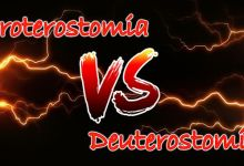 Difference between Series Proterostomia and Series Deuterostomia