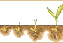 seed-evolution