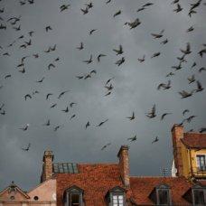 Ucelli sul cielo sopra la Città Vecchia di Varsavia.