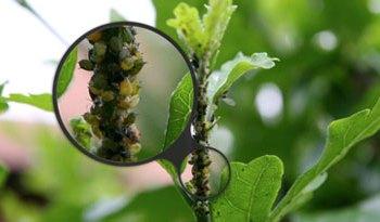 eliminare-parassiti-piante