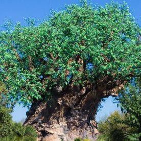 Animal Kingdom - Disney World Park