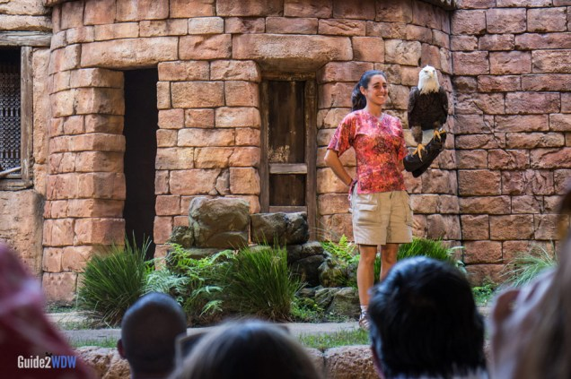 Eagle Flights of Wonder - Animal Kingdom Attraction