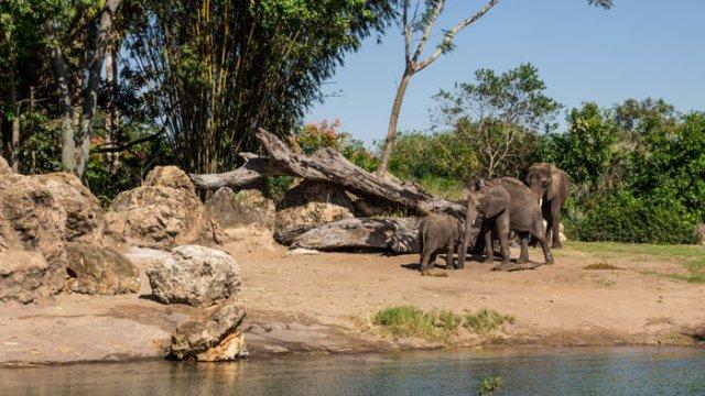Kilimanjaro-Safaris-WDW-Ride