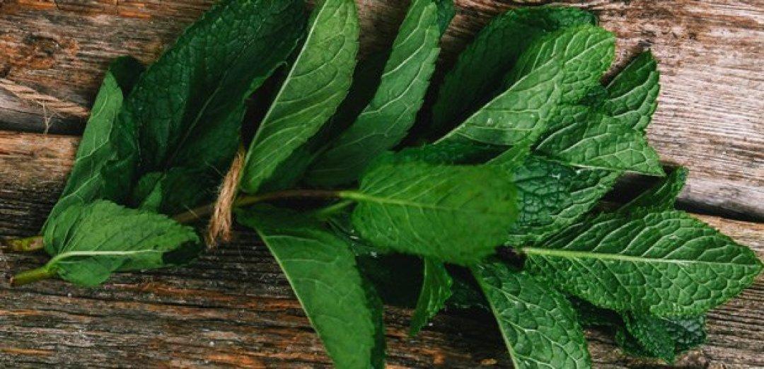 hojas de menta fresca