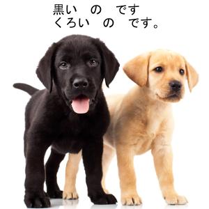"""La particule """"no"""" en japonais"""