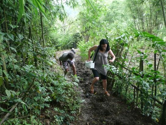 Sur le sentier des bufle du village!!!